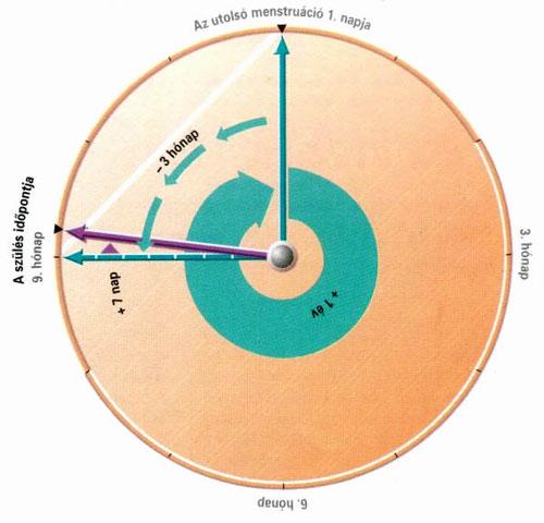 terhestanacsadas-es-szulesfelkeszites-13